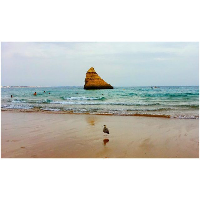 the rock seagull beach rock sea atlanticocean portugal algarve praiadarochahellip